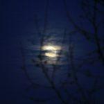 maan-en-boom-klein